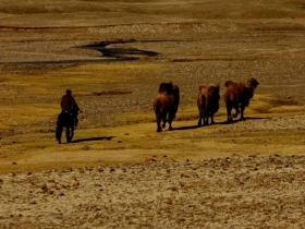 west_mongolia_2011-719-1